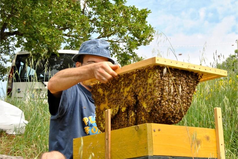 famiglia di api allevata con il metodo Perone